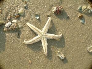 淺灘上的海星